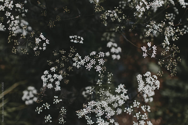 small white flowers in greenery by Nicole Mason for Stocksy United
