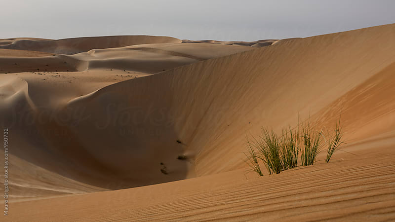 Desert. by Mauro Grigollo for Stocksy United