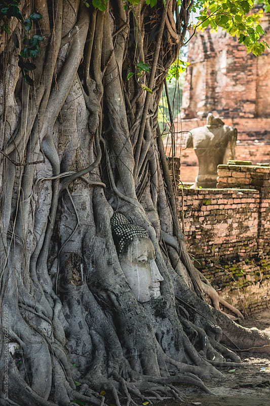 Roots fasten Buddha face by Chalit Saphaphak for Stocksy United