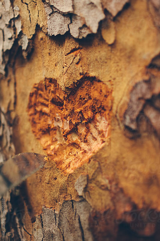 Heart Love Wood Engraving by HEX. for Stocksy United