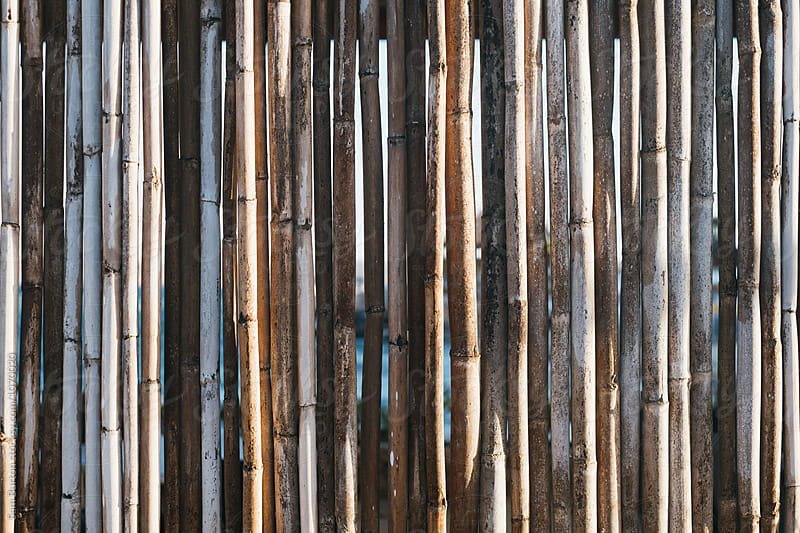 Bamboo fence by Sam Burton for Stocksy United