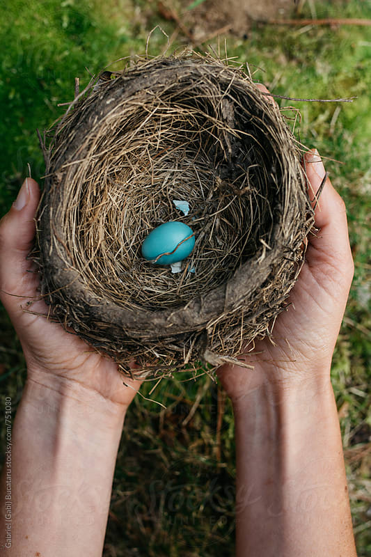 Single robin egg in a nest by Gabriel (Gabi) Bucataru for Stocksy United
