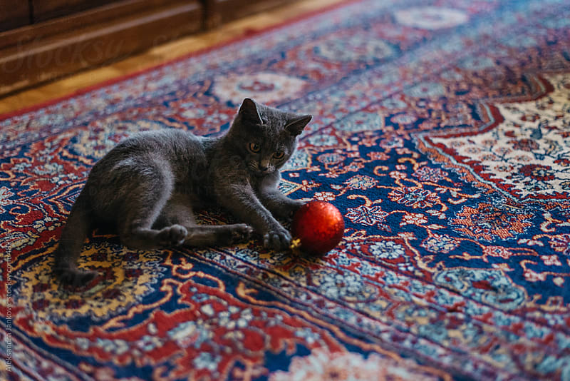 House cat playing with red christmas ornament by Aleksandra Jankovic for Stocksy United