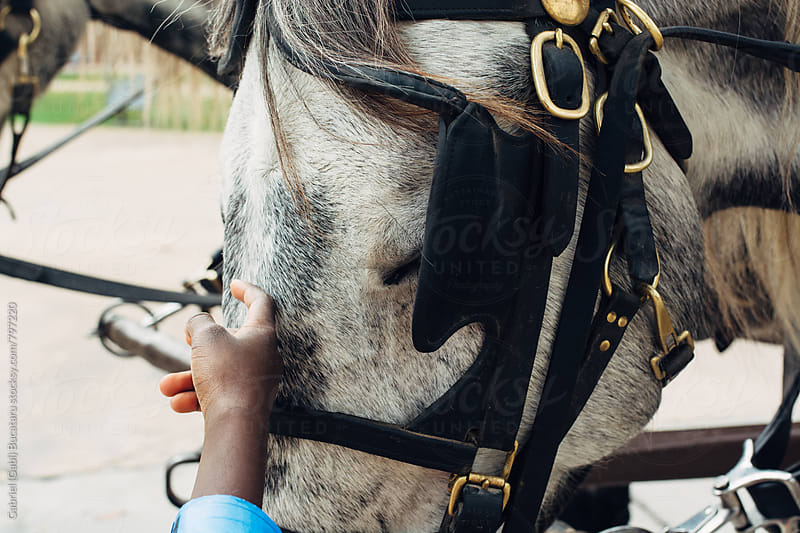 African American child's hand petting a horse by Gabriel (Gabi) Bucataru for Stocksy United