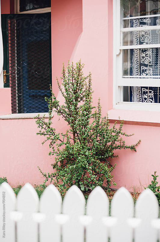 Jade Plant in front garden of a pink house by Kara Riley for Stocksy United