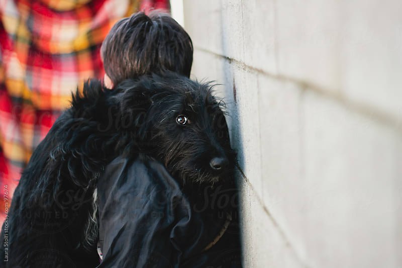 Giant Schnauzer dog in woman's arms looking straight at the camera by Laura Stolfi for Stocksy United