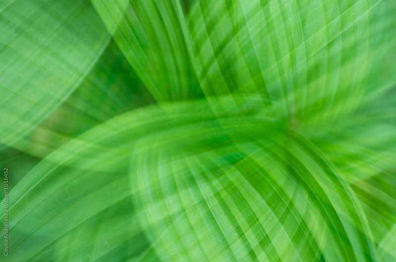 Abstract green leaves by Cosma Andrei for Stocksy United