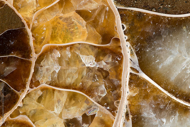 Fossil chambers, closeup by Mark Windom for Stocksy United
