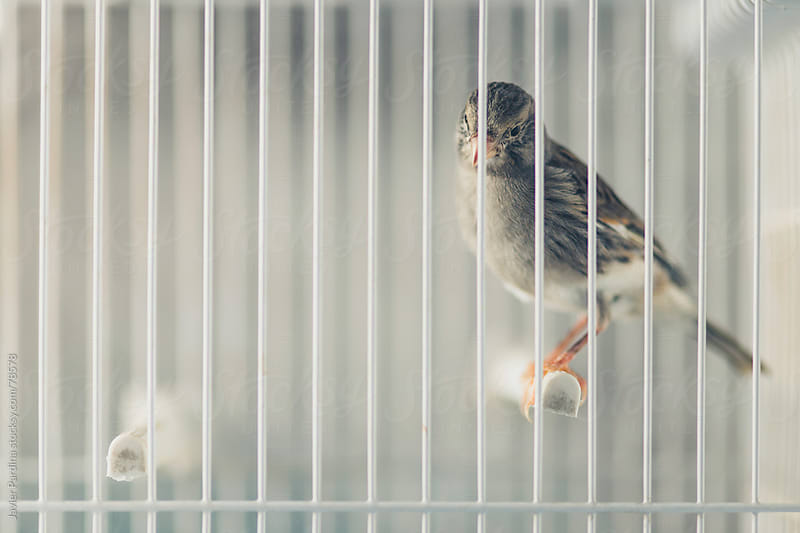 Bird locked in the cage by Javier Pardina for Stocksy United