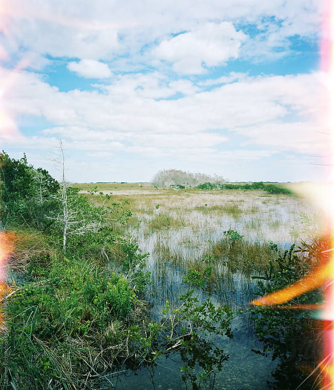 Climate change in the Florida Everglades by Marlon Richardson for Stocksy United