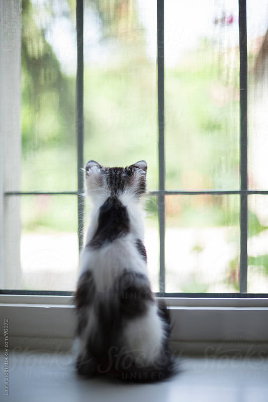 Kitty cat looking at the world outside the window by Laura Stolfi for Stocksy United