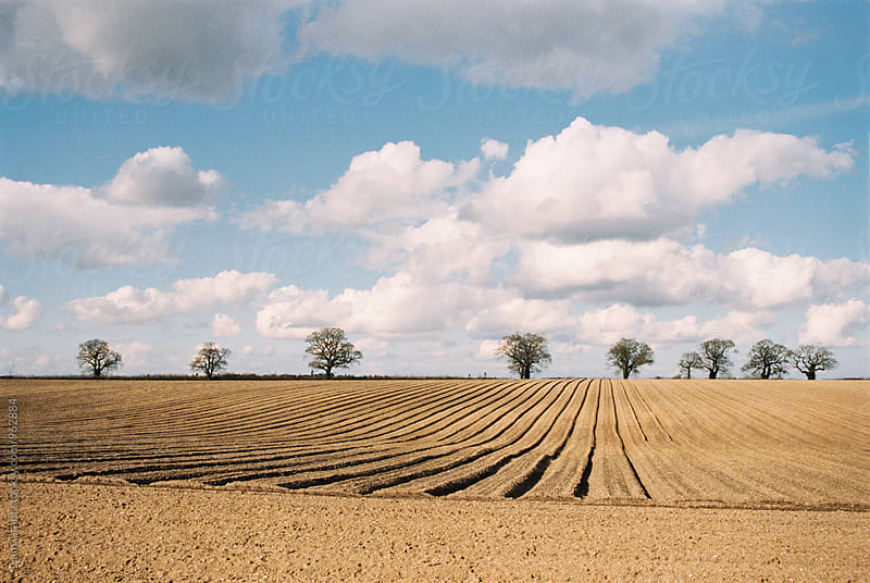 Tracks through a newly seeded field. Norfolk, UK. by Liam Grant for Stocksy United