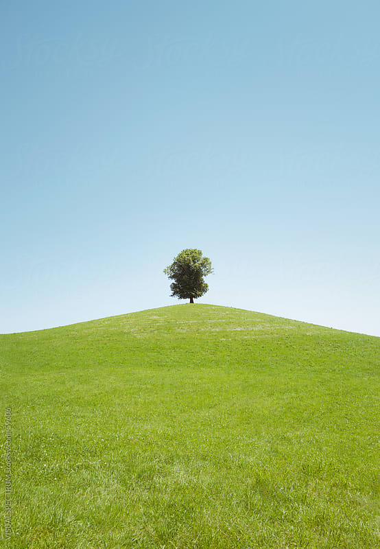 A Tree on a Hill by VISUALSPECTRUM for Stocksy United