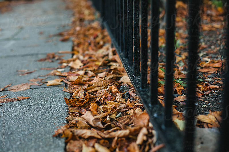Autumn leaves by Kitty Kleyn for Stocksy United