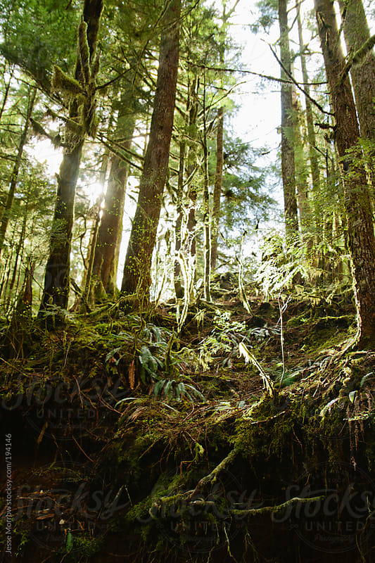Washington woods with light shining through by Jesse Morrow for Stocksy United