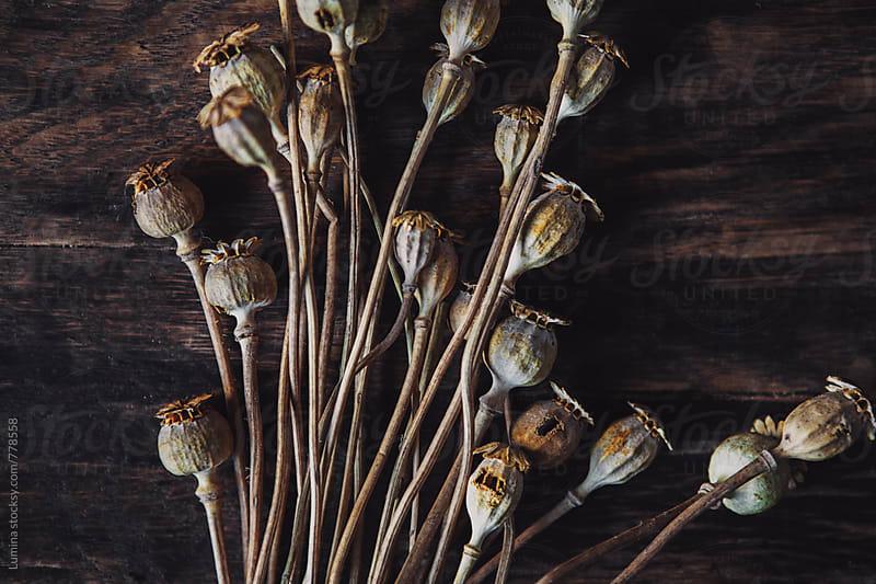 Dry Poppy Pods by Lumina for Stocksy United