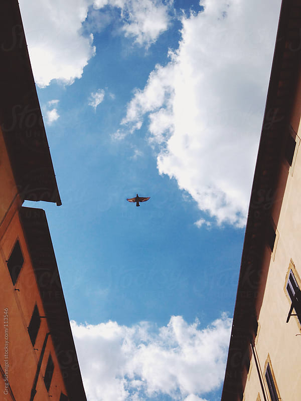 A bird flies between two buildings in Italy by Greg Schmigel for Stocksy United