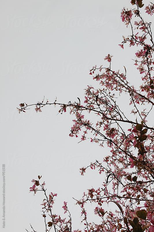 flower tree by Nate & Amanda Howard for Stocksy United