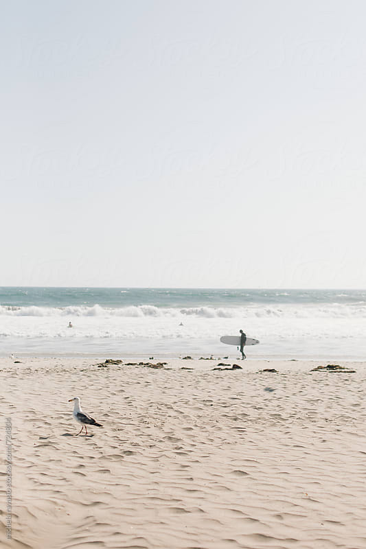 Seagull walking on Venice beach by michela ravasio for Stocksy United