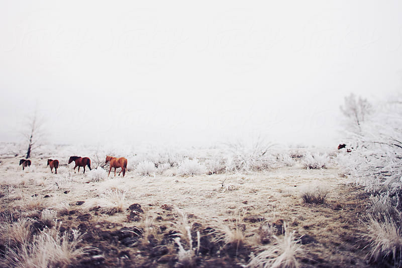 Winter Horse Trail by Kevin Russ for Stocksy United