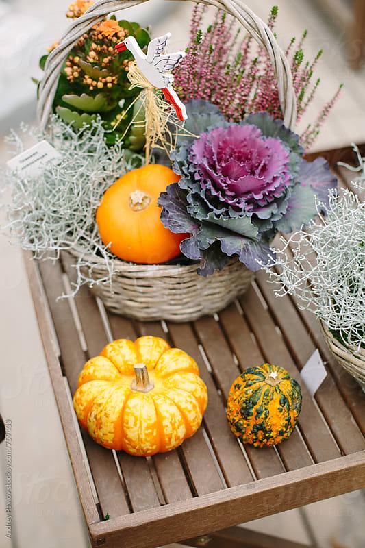 Autumn still life decoration by Andrey Pavlov for Stocksy United