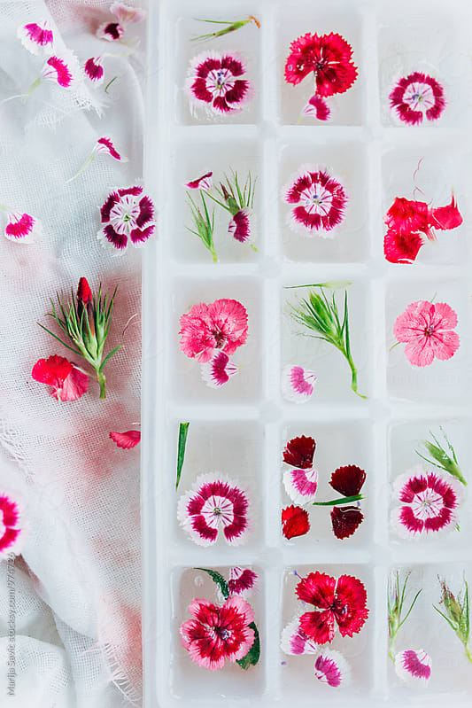 Flowery Ice Cubes by Marija Savic for Stocksy United