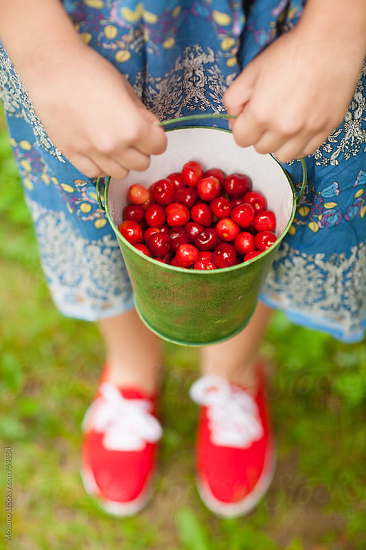 Woman holding a bucket full of ripe sweet cherries. by Mosuno for Stocksy United