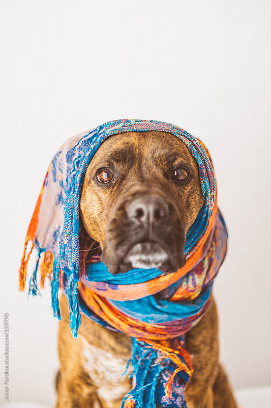 a fashion dog with scarf by Javier Pardina for Stocksy United
