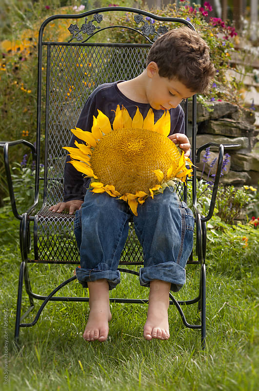 Sunflower Wonder by Rob Sylvan for Stocksy United
