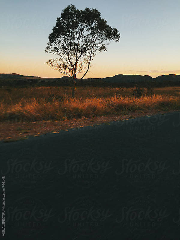 Tree Next to Road in National Park in Warm Sunset Light by Julien L. Balmer for Stocksy United