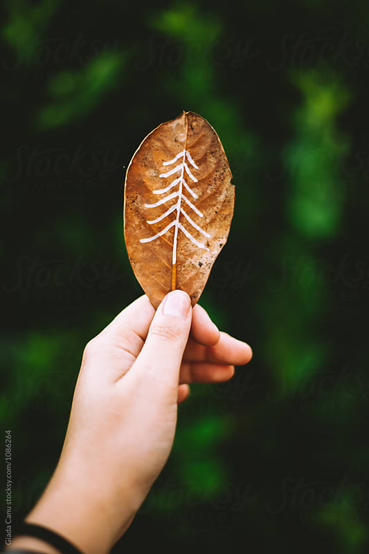 A tree sketched on a leaf by Giada Canu for Stocksy United