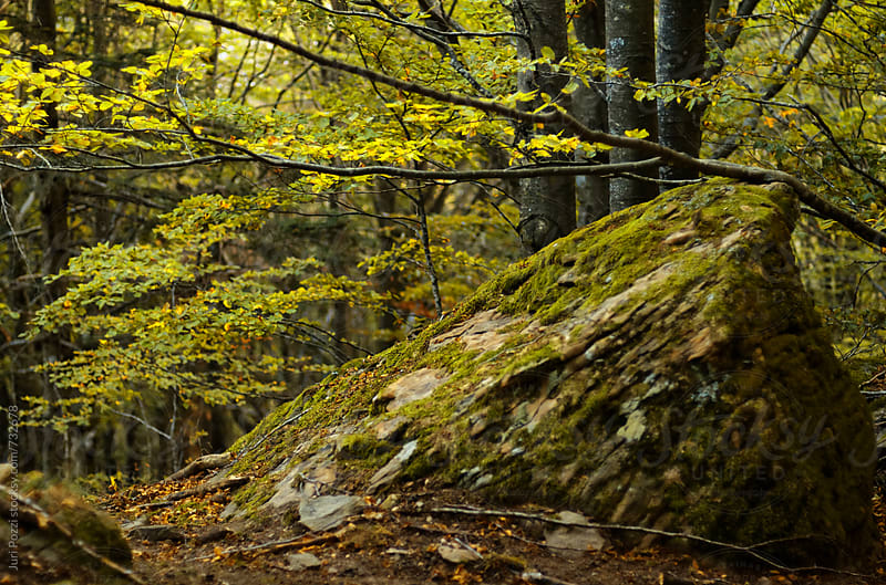 Beautiful Forest Scenery And Autumn Foliage by Juri Pozzi for Stocksy United
