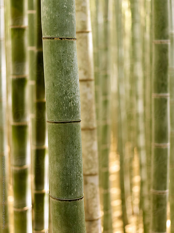 Arashiyama Bamboo Forest Grove by Fotografie Daniel Osterkamp for Stocksy United