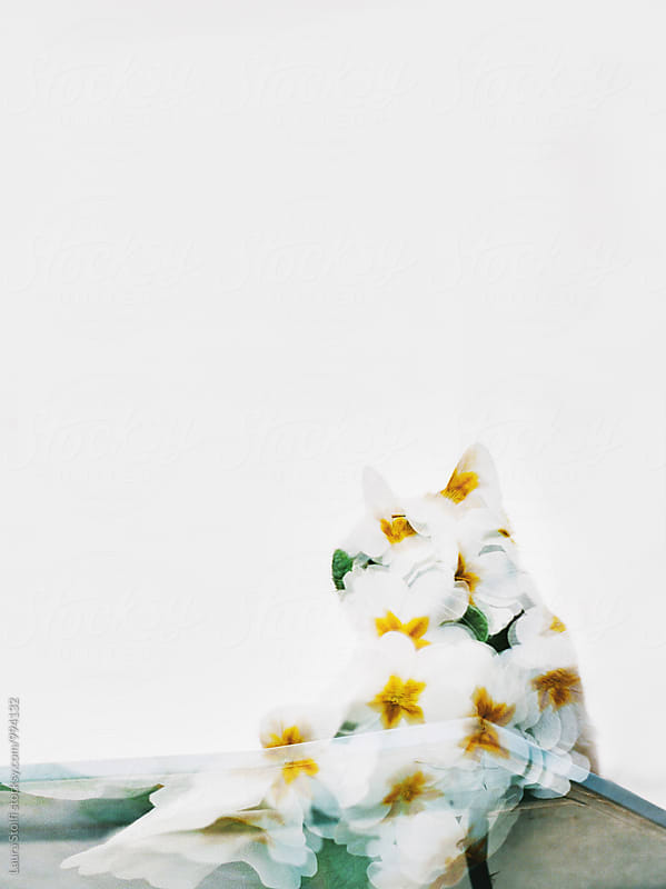 Cat's silhouette and flowers on it, double exposure on film by Laura Stolfi for Stocksy United