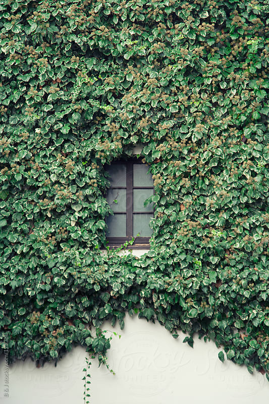 secret window by B & J for Stocksy United