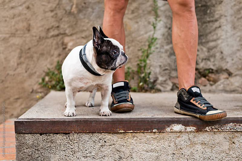 French bulldog with unrecognizable owner in sneakers by Guille Faingold for Stocksy United