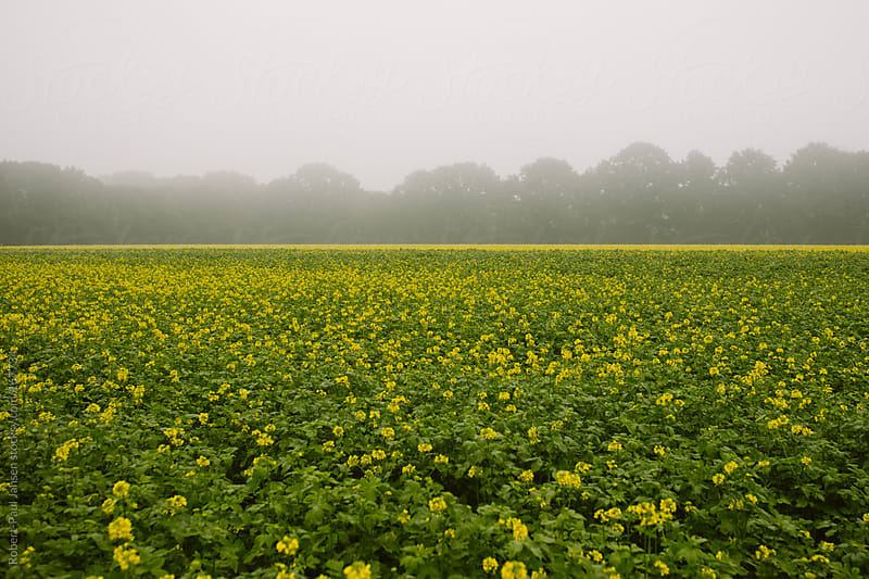 Yellow & Misty by Robert-Paul Jansen for Stocksy United