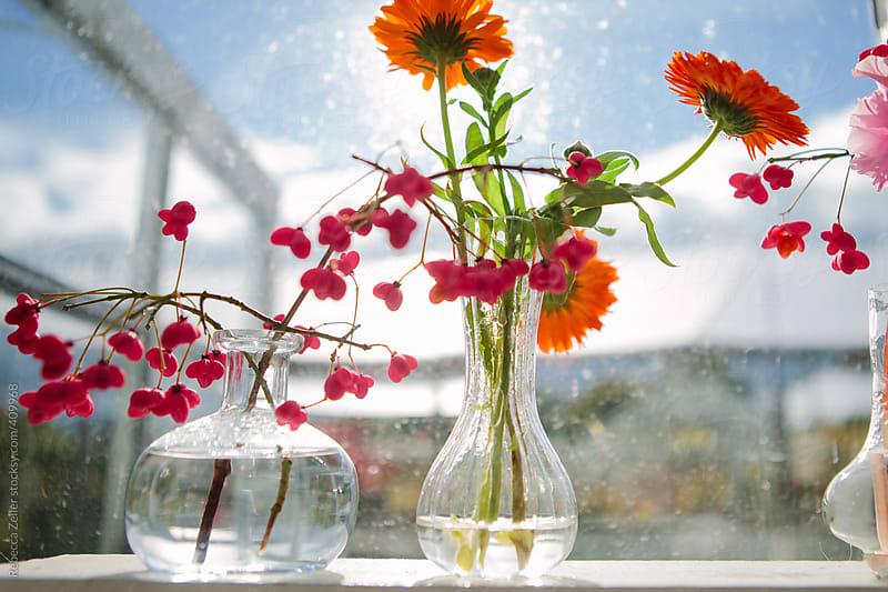 flowers in vases on a shelf in the sun by Rebecca Zeller for Stocksy United