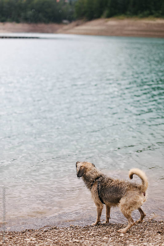 Dog at the beach by Marija Kovac for Stocksy United