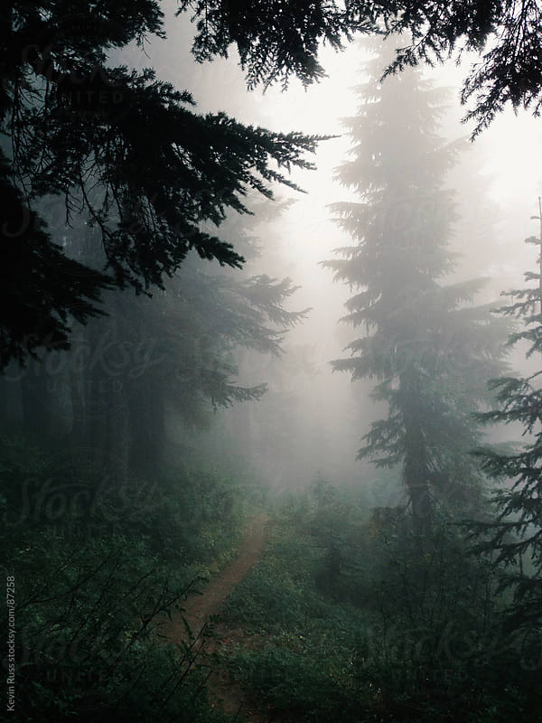 Foggy Trail by Kevin Russ for Stocksy United