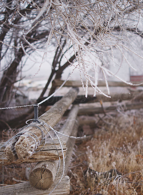 A wooden pole fence under a tree full of frost by Tana Teel for Stocksy United