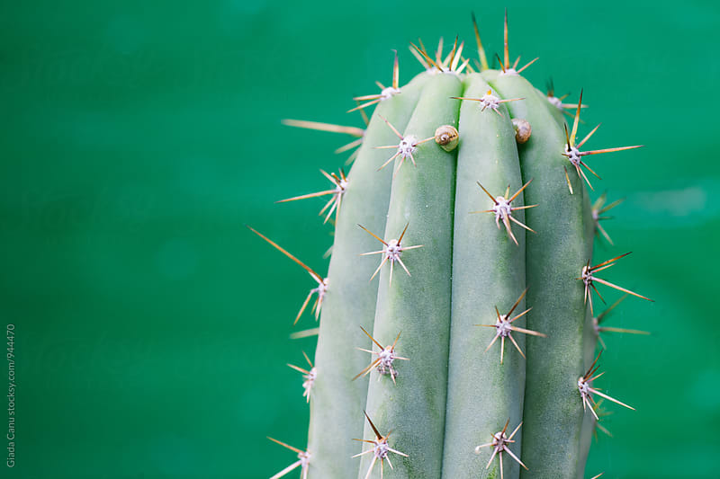 Cactus with two snails as it's eyes by Giada Canu for Stocksy United