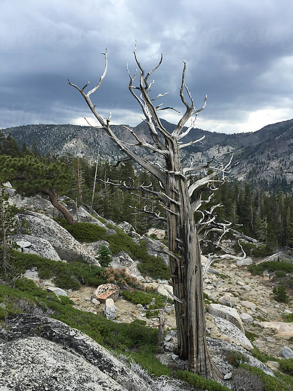 Mountain scene in Desolation Wilderness, CA, USA by Paul Edmondson for Stocksy United