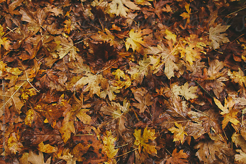 Fall leaves on the ground by Dylan M Howell Photography for Stocksy United