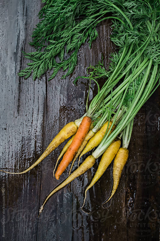 Freshly harvested carrots by Rowena Naylor for Stocksy United