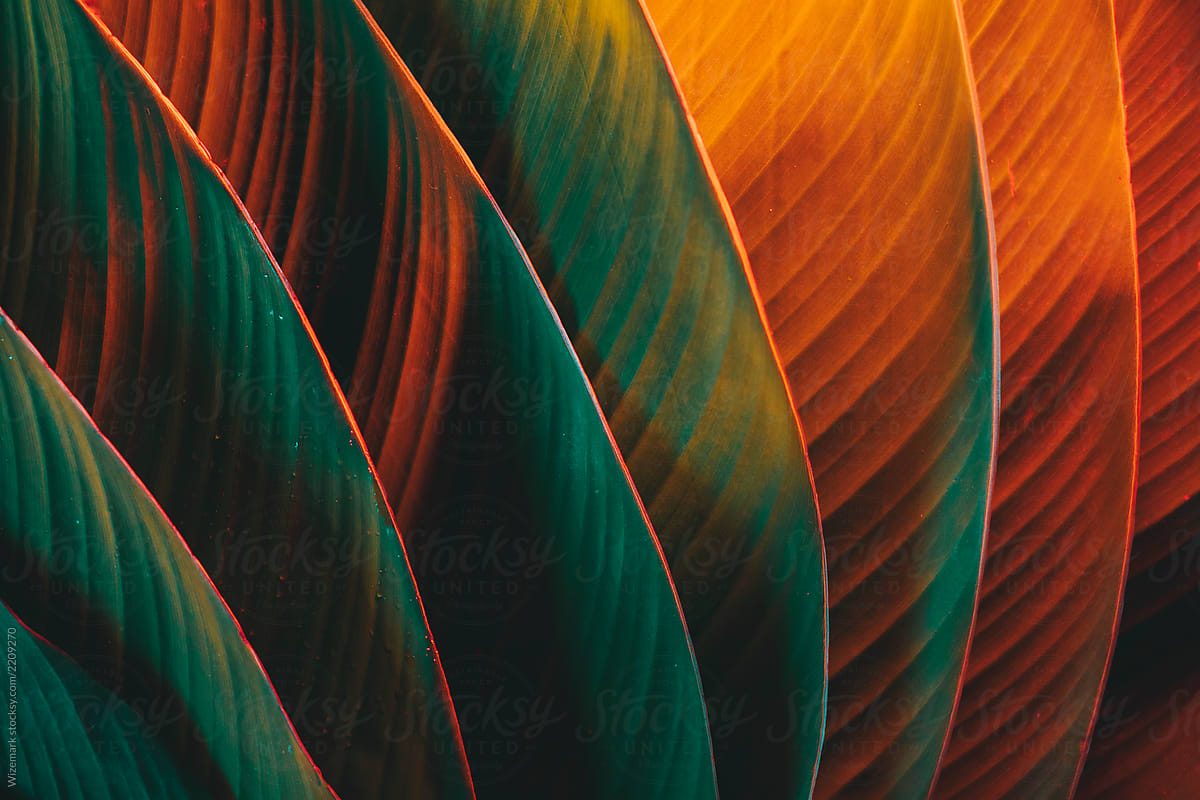 Palm Leaf Pattern Lit With Colorful Lights By Wizemark For Stocksy United