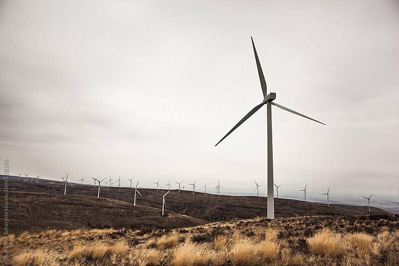 Wind turbines in a wind farm by Suprijono Suharjoto for Stocksy United