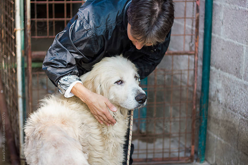 Woman hugs big sheep dog  by Laura Stolfi for Stocksy United