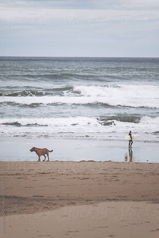 Dog and surfer on Cantabrian beach. Spain by BONNINSTUDIO for Stocksy United