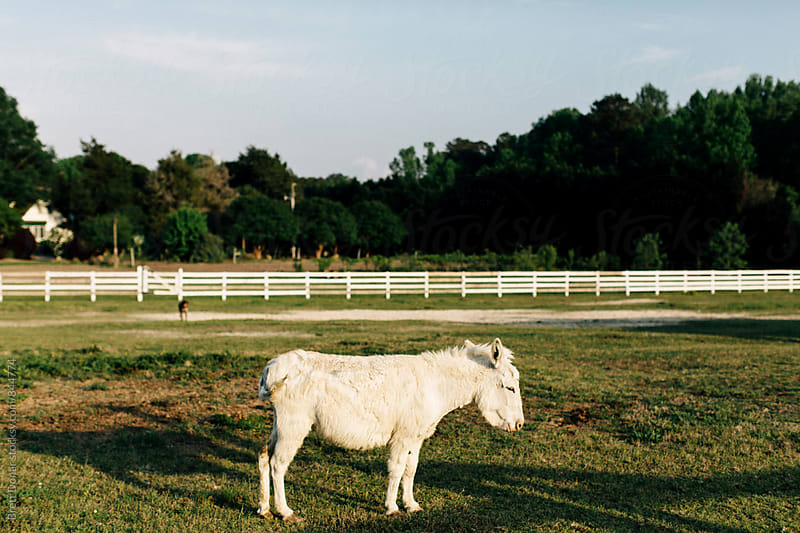 Donkey by Brett Donar for Stocksy United